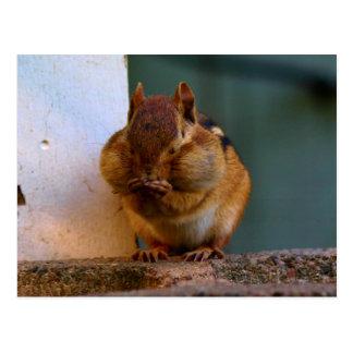 Cheeky Chipmunk Postcard