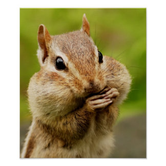 Cheeky Chipmunk Poster