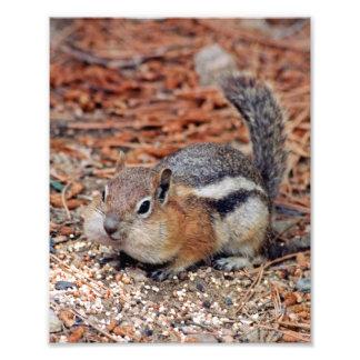 Cheeky Ground Squirrel Photo Print