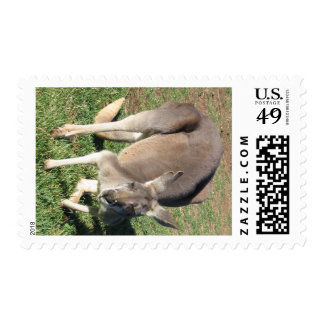 Cheeky Kangaroo - Stamp