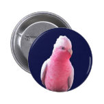 Cheeky pink and grey Australian parrot Pinback Buttons