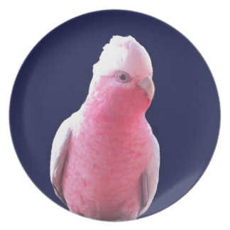 Cheeky pink and grey Australian parrot Melamine Plate