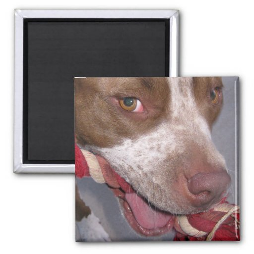 Cheeky Pitbull Refrigerator Magnets