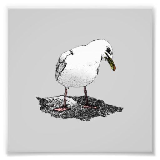 Cheeky Seagull Photo