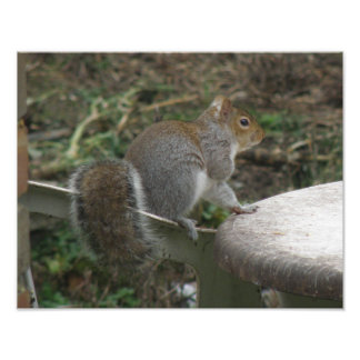 Cheeky Squirrel Waiting for Dinner Photo Print