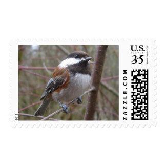 Cheep, the Chickadee Postcard Stamp