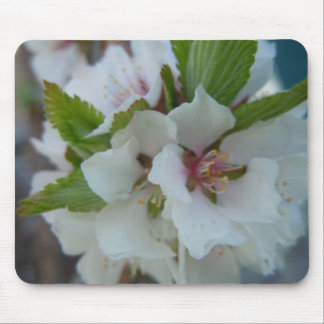 Cheerful Apple Blossom Mouse Pad
