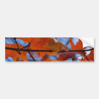 Cheerful Autumn Leaves Bumper Sticker