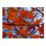 Cheerful Autumn Leaves Post Cards