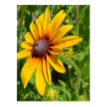 Cheerful Black Eyed Susan Flower Post Card