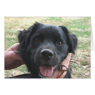Cheerful Black Lab Pup Does Camera Pose Greeting Cards