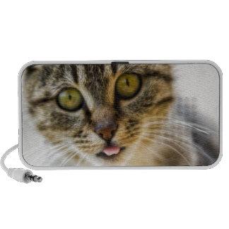 Cheerful cat travelling speakers