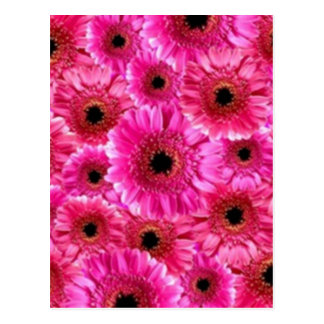 Cheerful Wow Pink Floral Macro Collage Postcard
