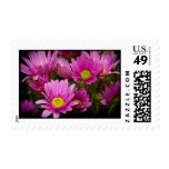 Cheery Daisies Black Border Stamps