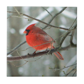 Cheery Red Cardinal Decorative Tile