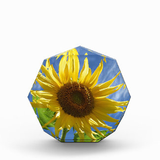 Cheery Sunflower Award