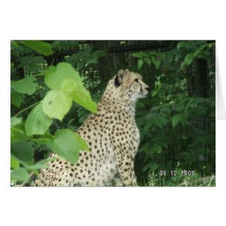 cheeta greeting cards