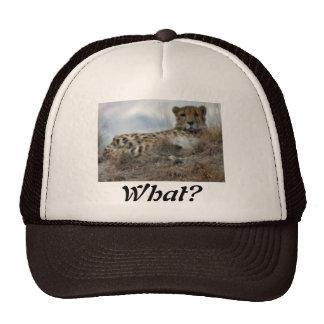 ¿cheeta perezoso, qué? gorras