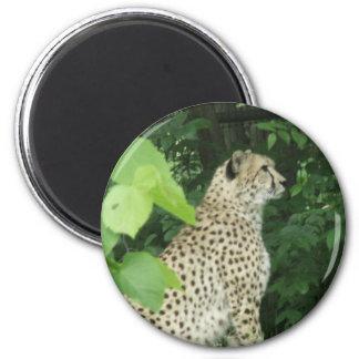 cheeta refrigerator magnets