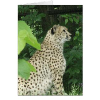 cheeta tarjeta de felicitación