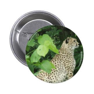 cheetah2 buttons
