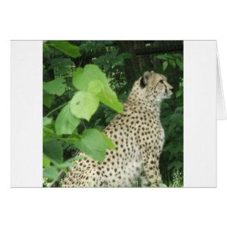 cheetah2 card
