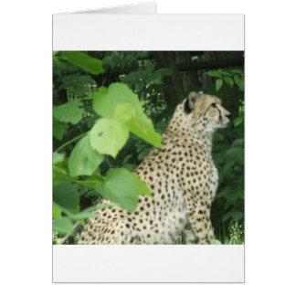 cheetah2 cards