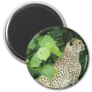cheetah2 refrigerator magnet