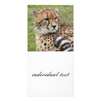 Cheetah 1115 card