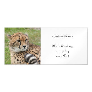Cheetah 1115 magnetic card