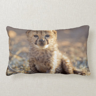 Cheetah 19 days old male cub lumbar pillow