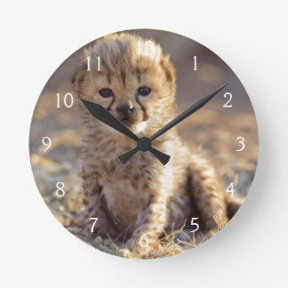 Cheetah 19 days old male cub round clock