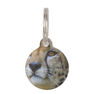 cheetah-21.jpg pet tag