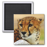 Cheetah 2 Inch Square Magnet