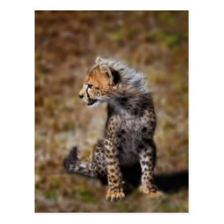 Cheetah (Acinonyx Jubatus) as seen in the Masai 2 Postcards