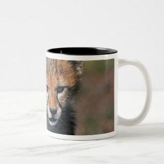 Cheetah (Acinonyx Jubatus) as seen in the Masai 3 Coffee Mugs