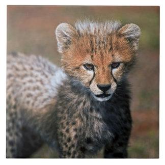 Cheetah (Acinonyx Jubatus) as seen in the Masai 3 Tile