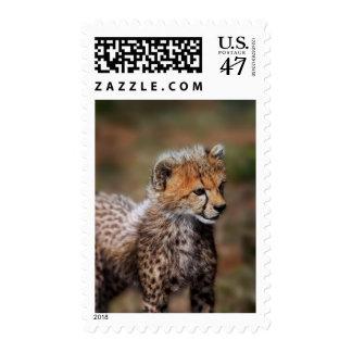 Cheetah (Acinonyx Jubatus) as seen in the Masai Postage Stamp