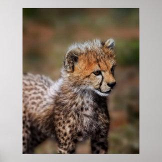 Cheetah (Acinonyx Jubatus) as seen in the Masai Poster