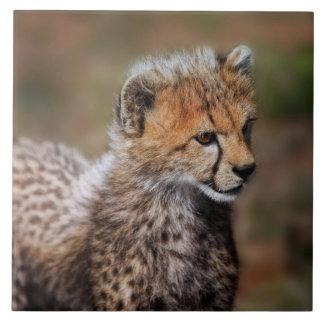 Cheetah (Acinonyx Jubatus) as seen in the Masai Tile