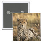 Cheetah, Acinonyx jubatus, cub laying downin 2 Inch Square Button