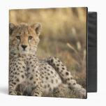 Cheetah, Acinonyx jubatus, cub laying downin Binder