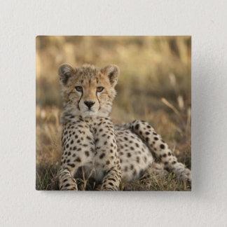 Cheetah, Acinonyx jubatus, cub laying downin Button