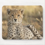 Cheetah, Acinonyx jubatus, cub laying downin Mouse Pad