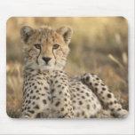 Cheetah, Acinonyx jubatus, cub laying downin Mouse Pads