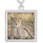 Cheetah, Acinonyx jubatus, cub laying downin Necklaces