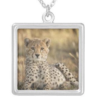 Cheetah, Acinonyx jubatus, cub laying downin Silver Plated Necklace