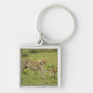 Cheetah, Acinonyx jubatus, cubs hunting and Keychain