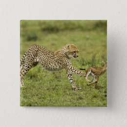 Cheetah, Acinonyx jubatus, cubs hunting and Pinback Button