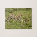 Cheetah, Acinonyx jubatus, cubs hunting and Jigsaw Puzzles